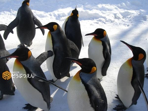 02旭川-旭山zoo05.jpg
