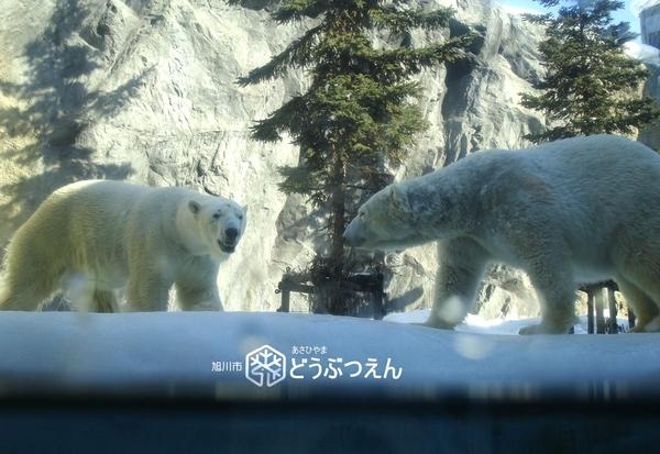 02旭川-旭山zoo06.jpg