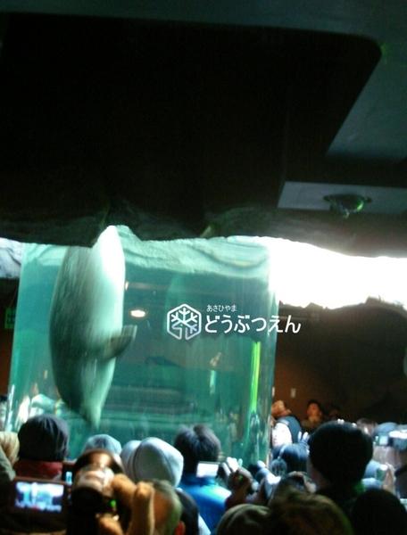 02旭川-旭山zoo08.jpg