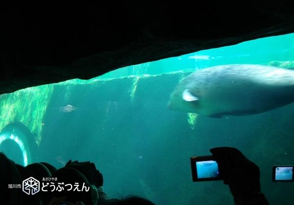 02旭川-旭山zoo09.jpg
