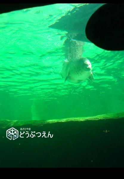 02旭川-旭山zoo10.jpg