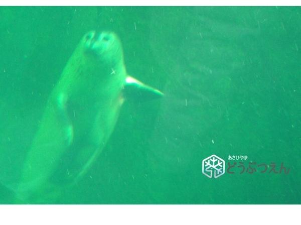 02旭川-旭山zoo11.jpg