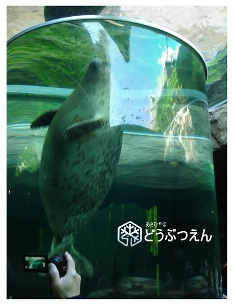 02旭川-旭山zoo12.jpg