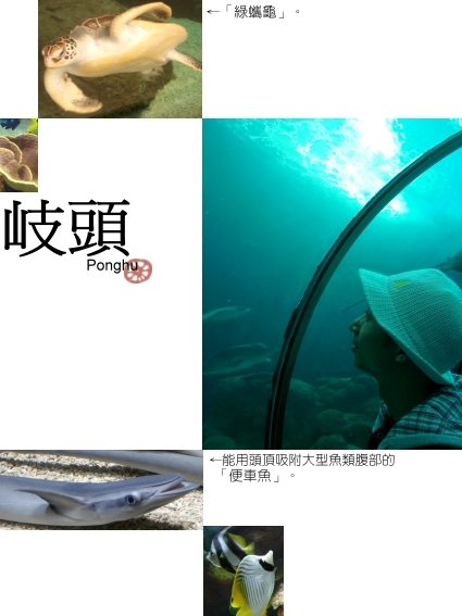 澎湖北環-03岐頭澎湖水族館.jpg