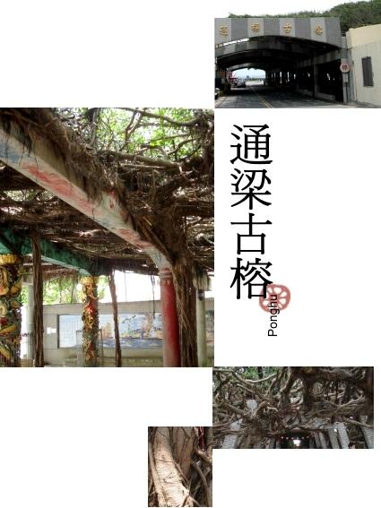澎湖北環-05通梁古榕.jpg