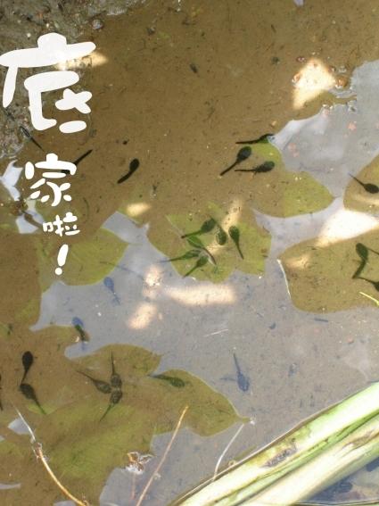 01竹子湖04.jpg