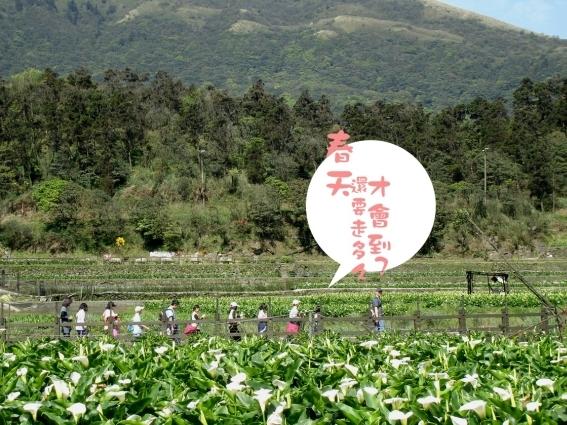 01竹子湖05.jpg
