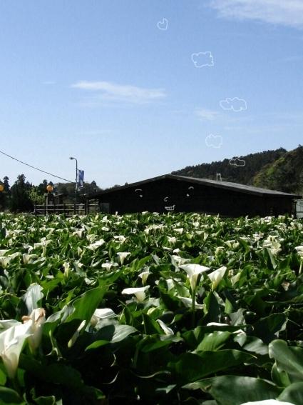 01竹子湖06.jpg