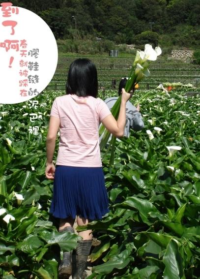 01竹子湖07.jpg