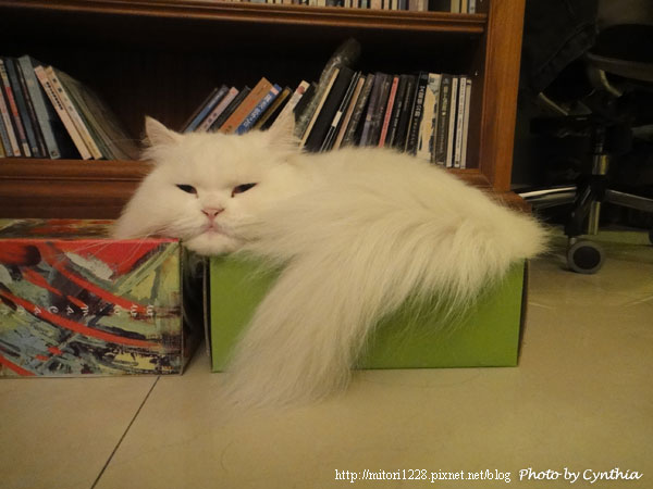 Hane在紙箱裡1
