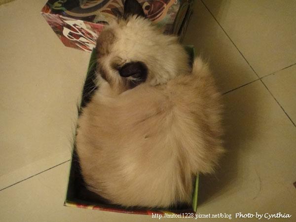 Mori在紙箱裡1
