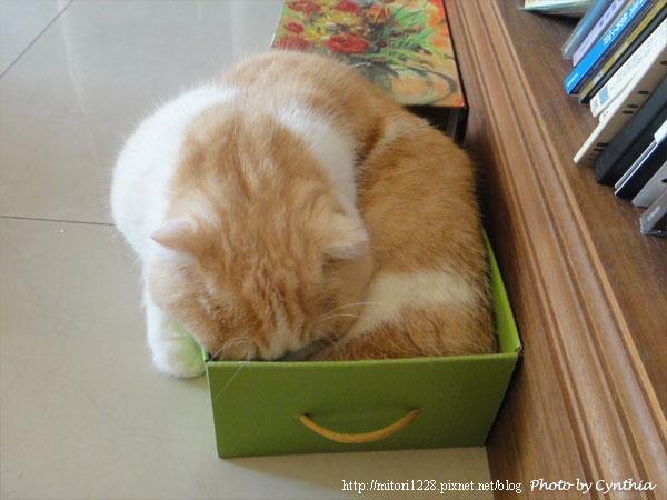 Biru在紙箱裡1