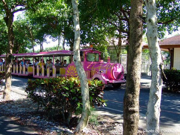 當天的桃紅色遊園車
