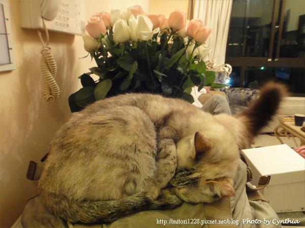 Sora & Flowers 3