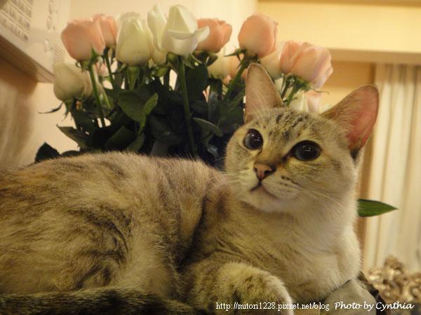 Sora & Flowers 4