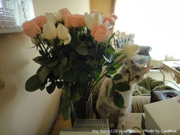 Sora & Flowers 5