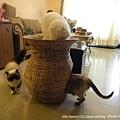 蓮花梗手工編織貓窩1
