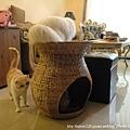 蓮花梗手工編織貓窩2