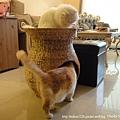 蓮花梗手工編織貓窩3