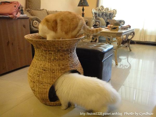蓮花梗手工編織貓窩4
