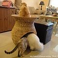 蓮花梗手工編織貓窩5