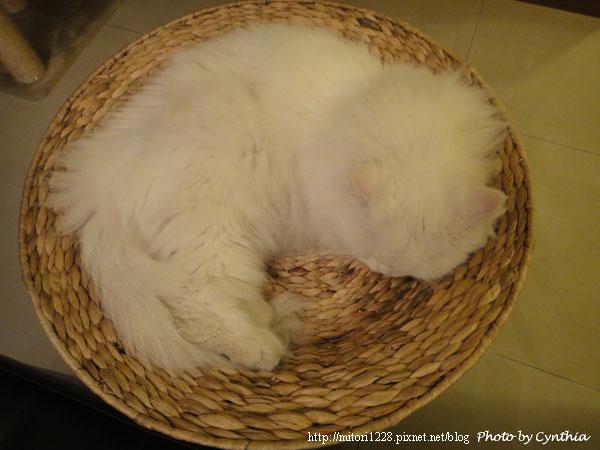 蓮花梗手工編織貓窩8