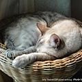 蓮花梗手工編織貓窩11