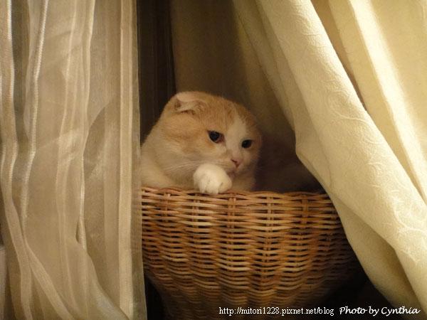 蓮花梗手工編織貓窩12