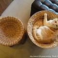 貓窩比較圖3
