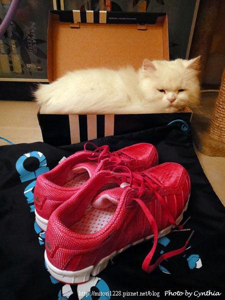 買球鞋2011-1