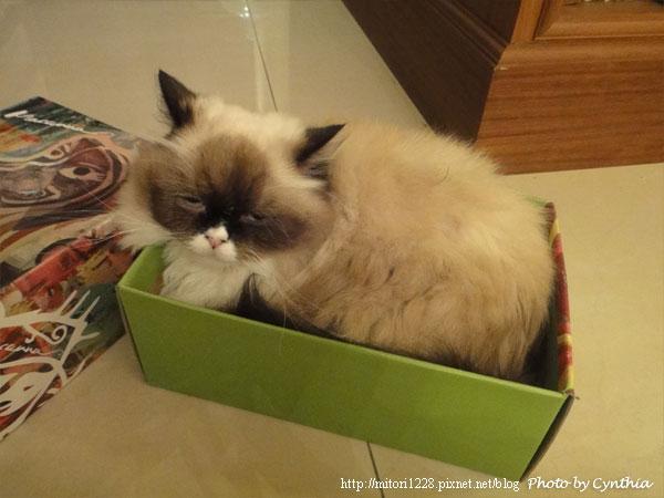 Mori在紙箱裡2