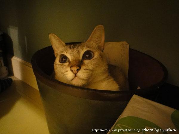 Sora在垃圾桶裡