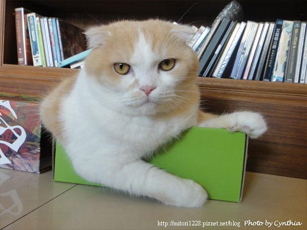 Biru在紙箱裡2