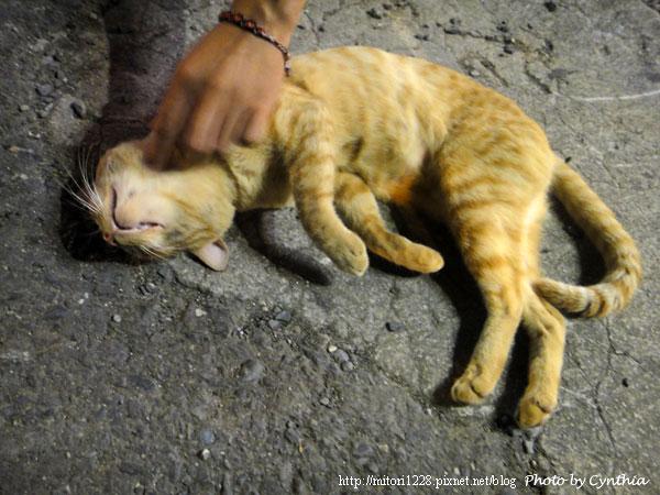 墾丁大街-好塞ㄋㄞ的貓咪