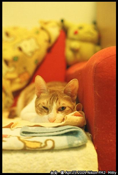 FM2-cat-013.jpg
