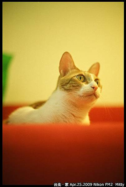 FM2-cat-011.jpg