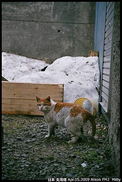 FM2-cat-008.jpg