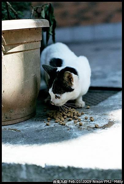 FM2-cat-007.jpg