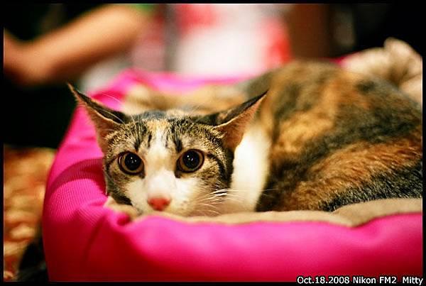 FM2-cat-004.jpg