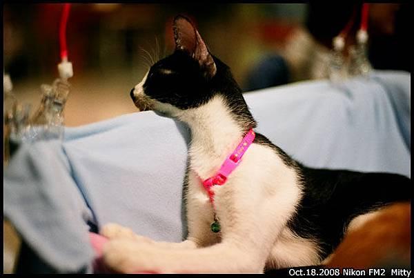 FM2-cat-002.jpg