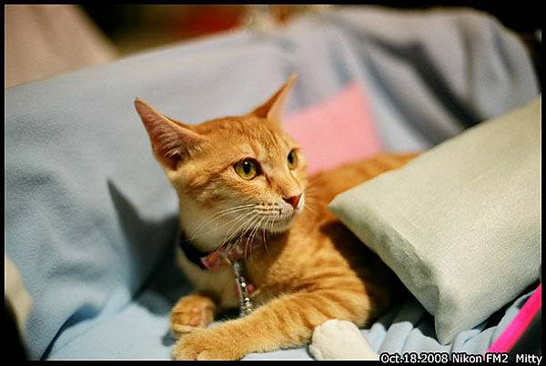 FM2-cat-001.jpg