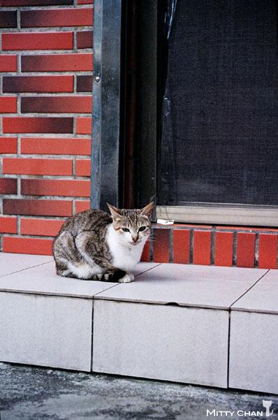 FM2-cat-014-V4.jpg