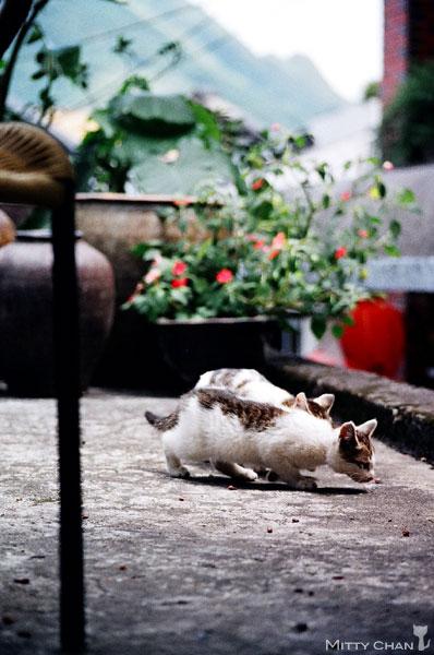 FM2-cat-015-v4.jpg
