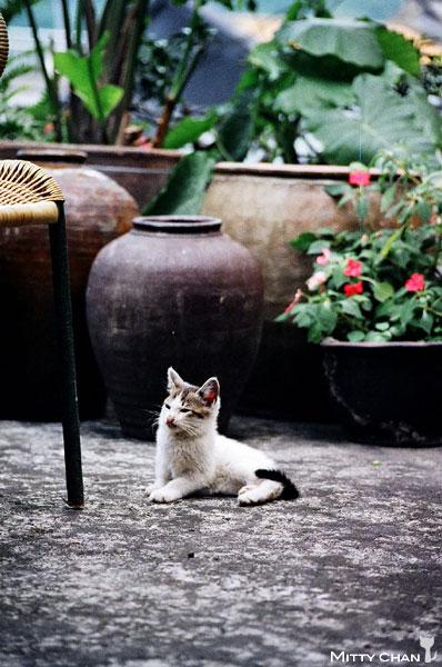FM2-cat-016-v4.jpg