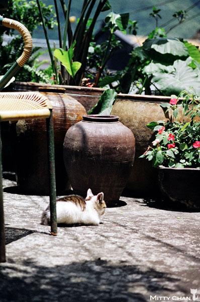 FM2-cat-018-v4.jpg