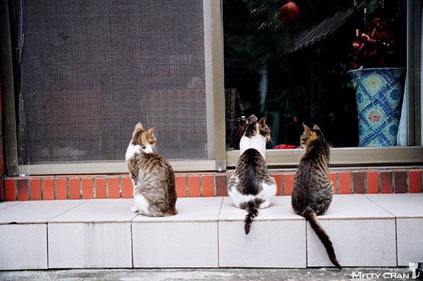 FM2-cat-022-v4.jpg