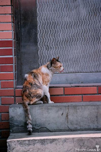 FM2-cat-028-x4.jpg