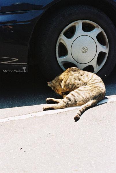 FM2-cat-046-v200.jpg