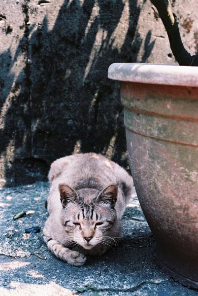 FM2-cat-061-x400.jpg