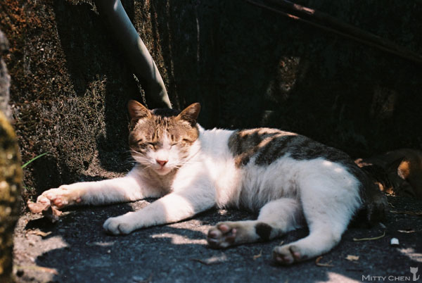 FM2-cat-062-x400.jpg